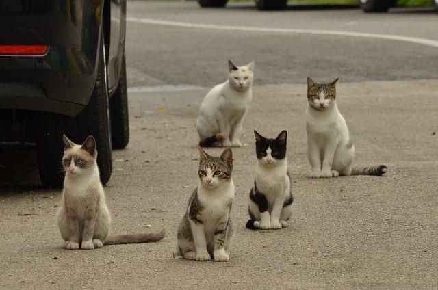 adoptar-a-un-gato