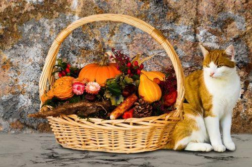 alimentos-buenos-para-gatos