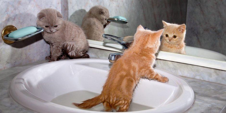 bañar-gato-bebe