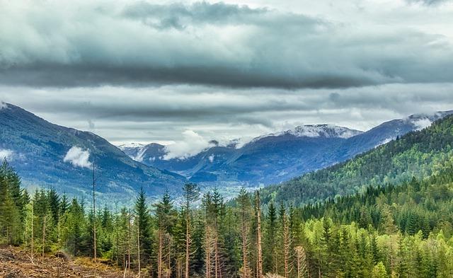 bosque-de-noruega-paisaje