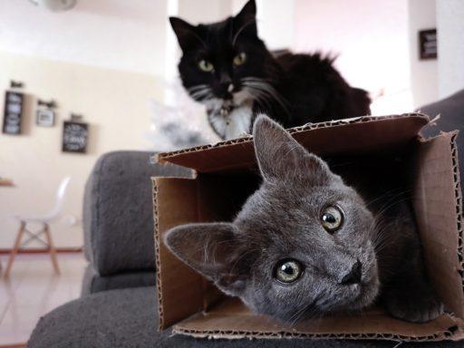 celo-en-los-gatos