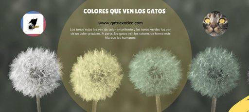 colores-ven-los-gatos