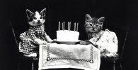 cuantos-años-vive-el-gato