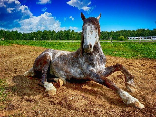 cuantos-años-vive-un-caballo