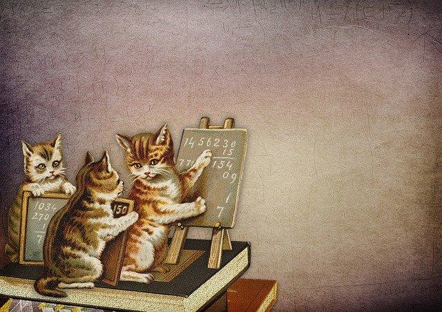 cuantos-años-vive-un-gato