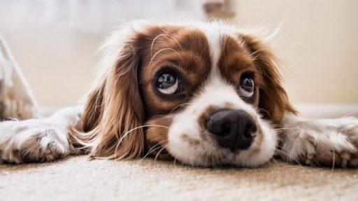 cuantos-años-vive-un-perro