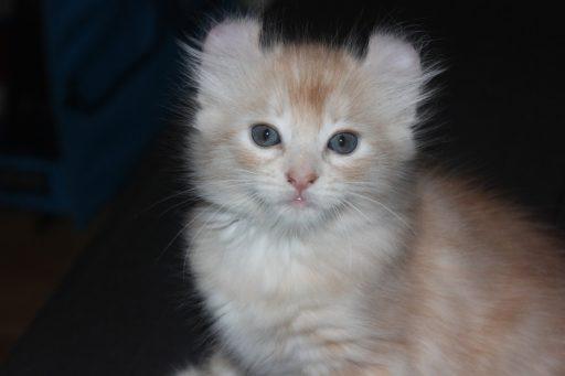 curl-americano-bebe