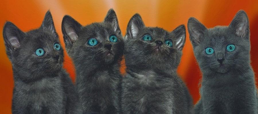 fotos-de-gatos-pequeños