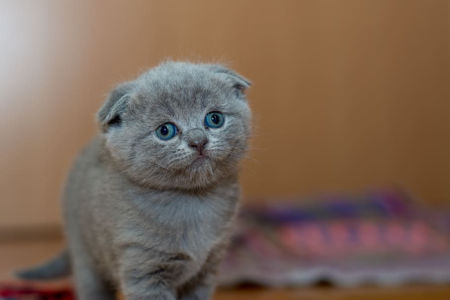 gatito-adorable