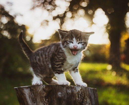 gatito-asustado