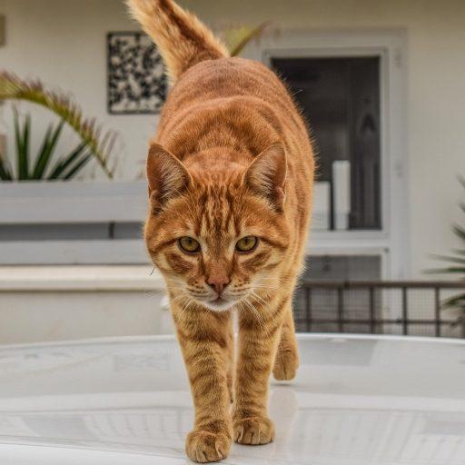 gatito-atigrado-naranja