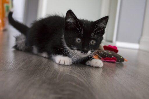 gatito-bebe-jugando