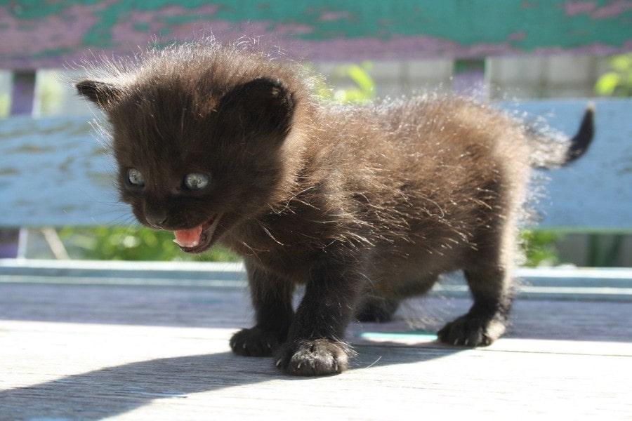 gatito-gracioso