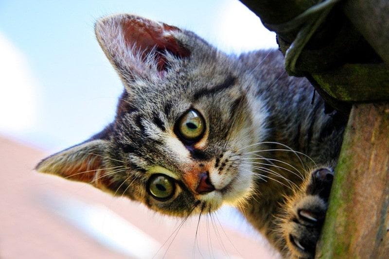 gatito-mirando