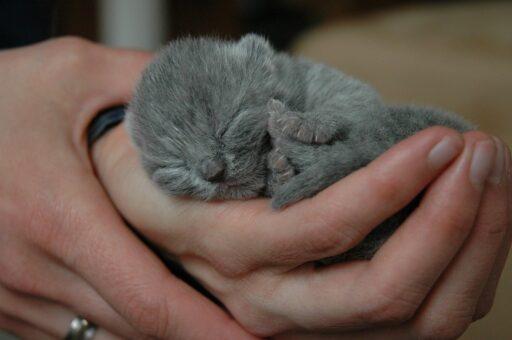 gatito-recien-nacido