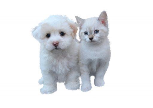 gatito-y-perrito