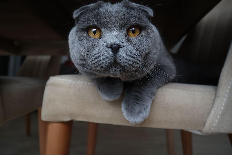 gatitos-mas-bonitos