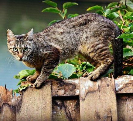 gato-alerta