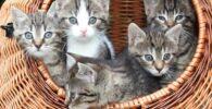 gato-bebe-adopcion