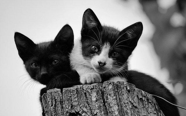 gato-blanco-negro-cachorro