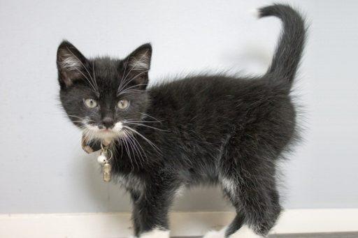 gato-blanco-y-negro-bebe