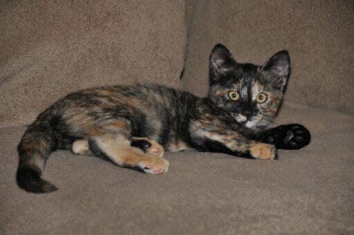 gato-carey-bebe
