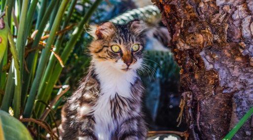 gato-comun-europeo-precio