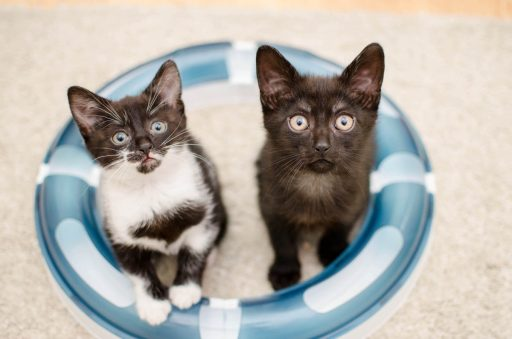 gato-de-color-negro-y-blanco