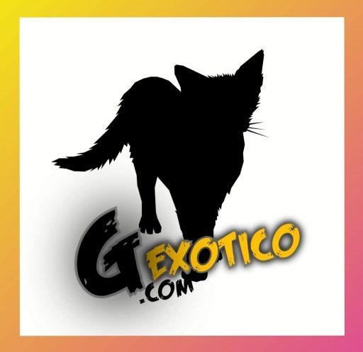 gato-exotico-marca
