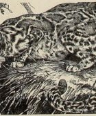 gato-jaspeado