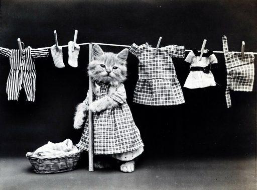 gato-lavandose