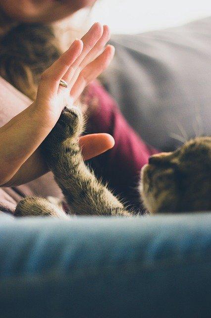 gato-mimoso