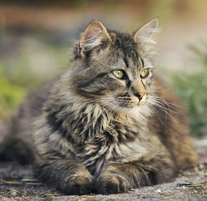 gato-mirando