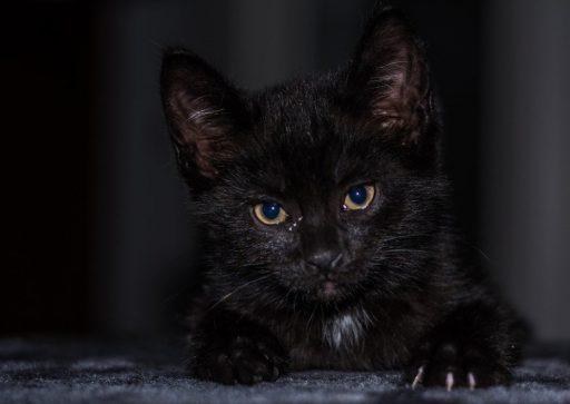 gato-negro-cachorro