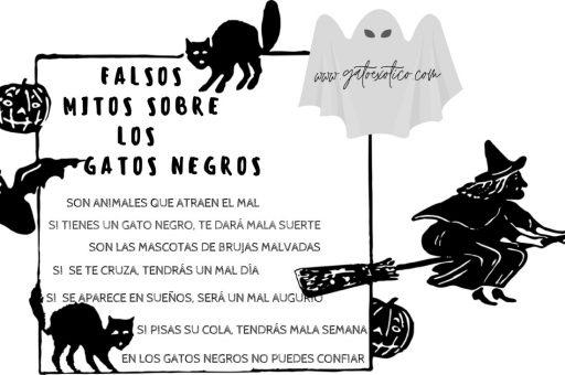 gato-negro-mala-suerte