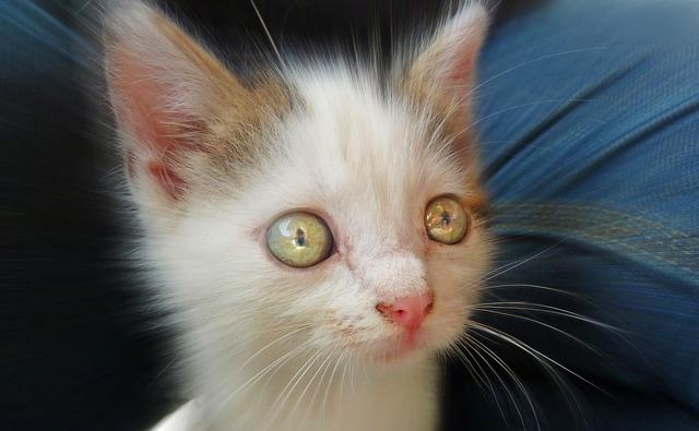 gato-ojos-brillantes