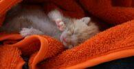 gato-recien-nacido
