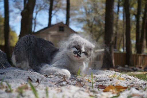 gato-sucio