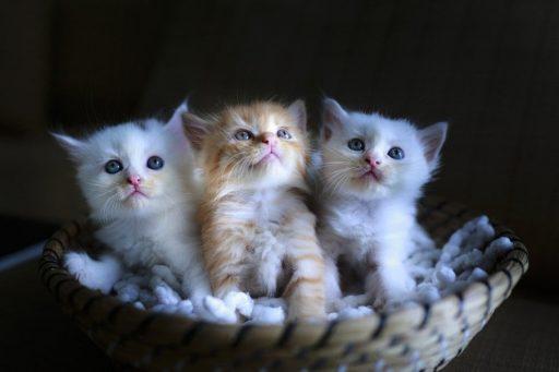 gatos-bonitos