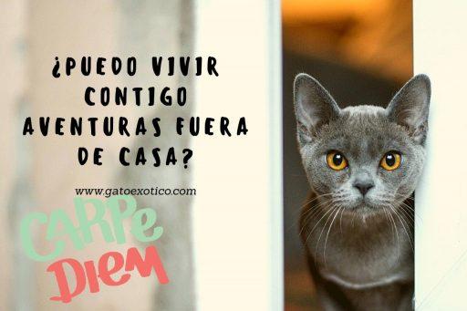 gatos-con-frases