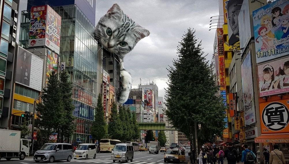 gatos-de-raza-grande