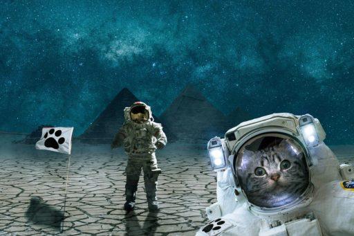 gatos-egipcios
