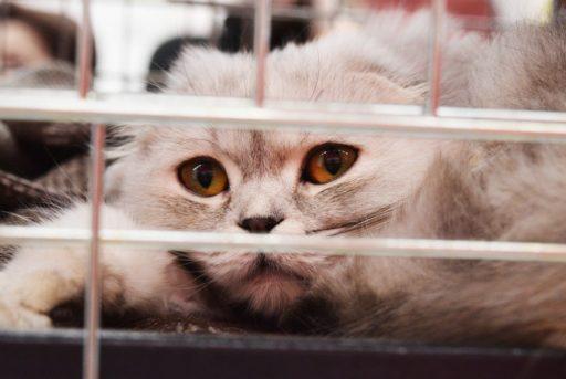 gatos-en-adopcion