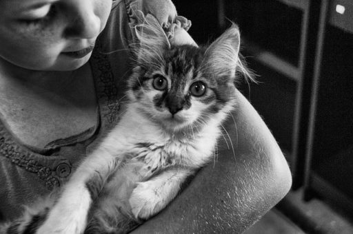 gatos-hipoalergenicos