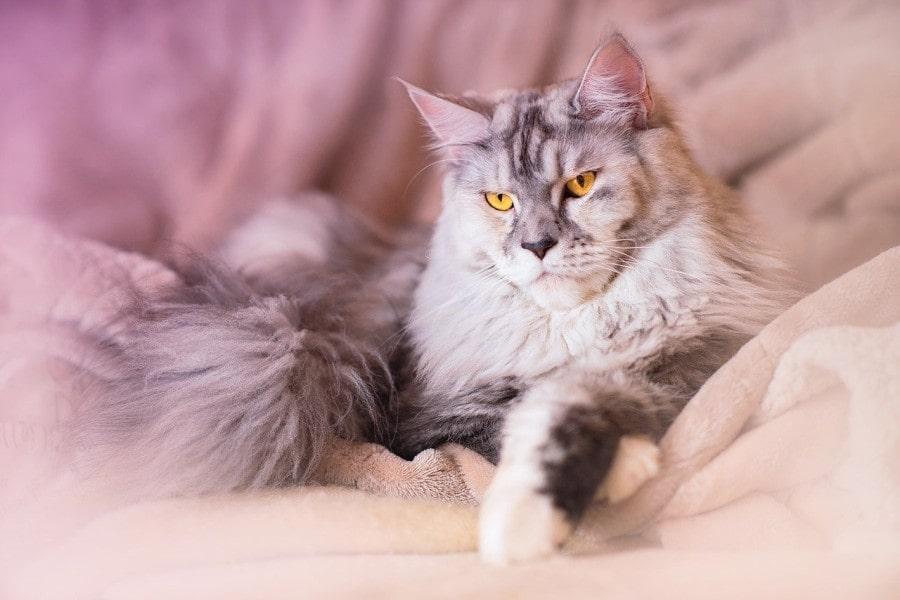 gatos-mas-bonitos-de-mundo