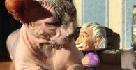 gatos-sin-pelo
