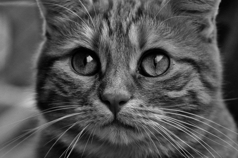 gatos-ven-en-blanco-y-negro