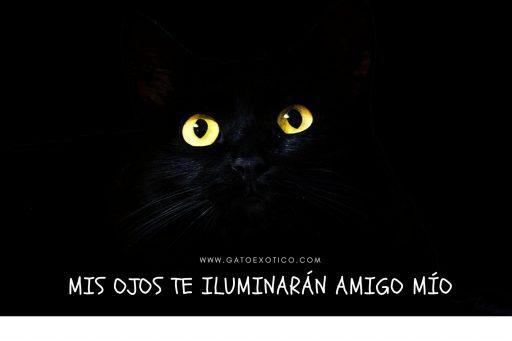 gatos-ven-en-la-oscuridad