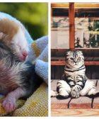 gatos-y-bebes