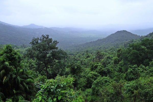india-selva
